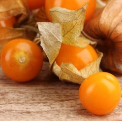Physalis Aunt Molly's
