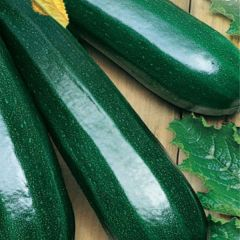 Zucchini Black Beauty, sommarsquash, plantor