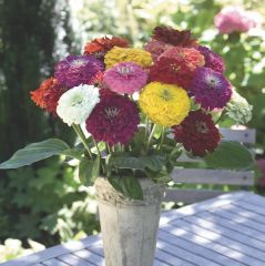 Zinnia Summer Bouquet