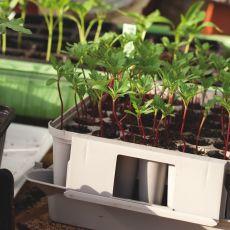 Pluggbox - ger dina pluggplantor djupa och fina rotsystem