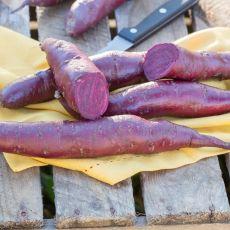 Sötpotatis Erato Violet, plantor