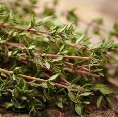 Timjan Old English Thyme, fröer - NYHET 2021