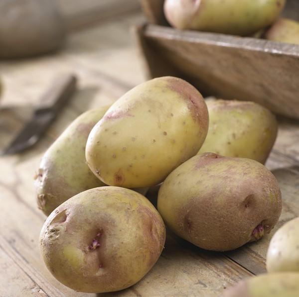 king edward potatis